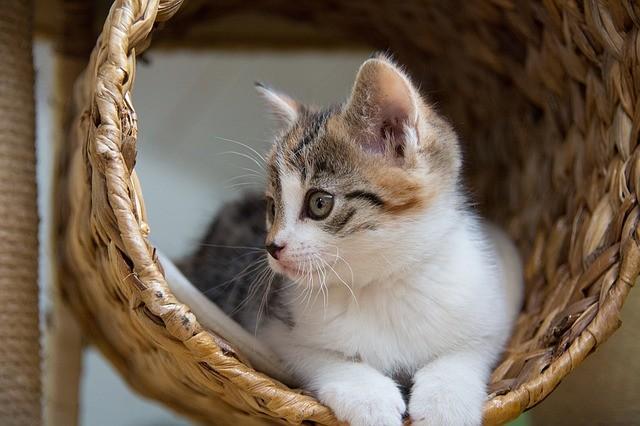 cat-1373895_640