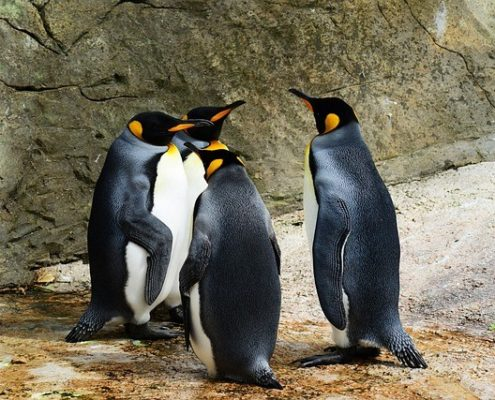4 penguins having a party inside a zoo