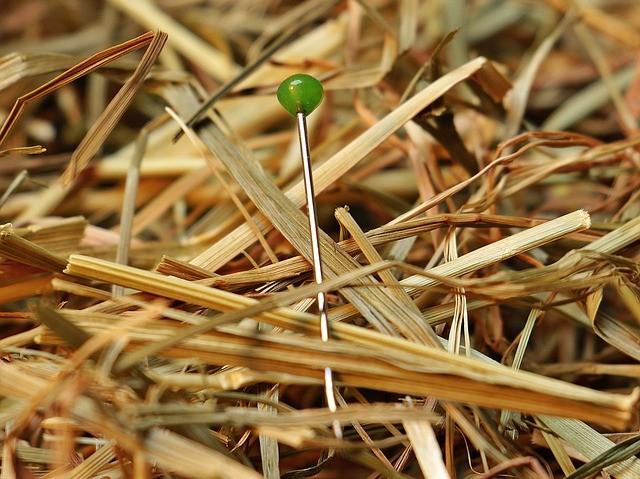 needle-in-a-haystack-1752846_640