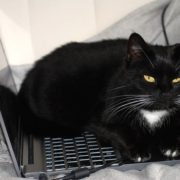 black scary cat sitting on top of a computer
