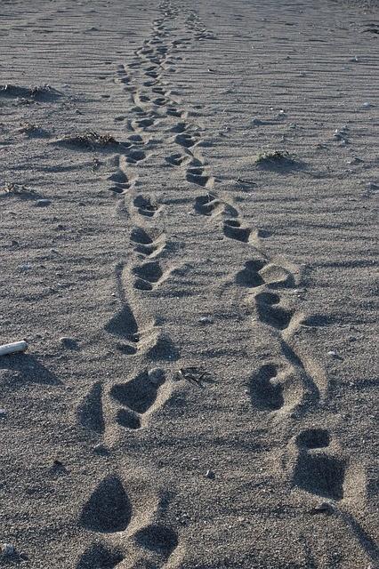 footsteps-962147_640