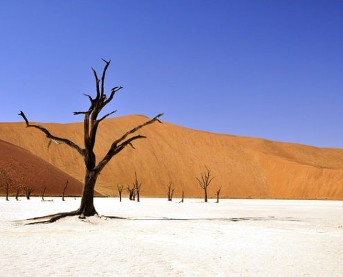 trees without leaves in the desert on a sunny day