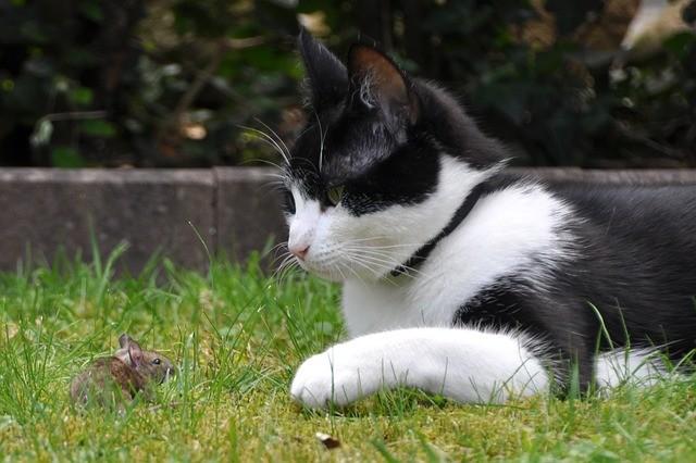 cat-396536_640